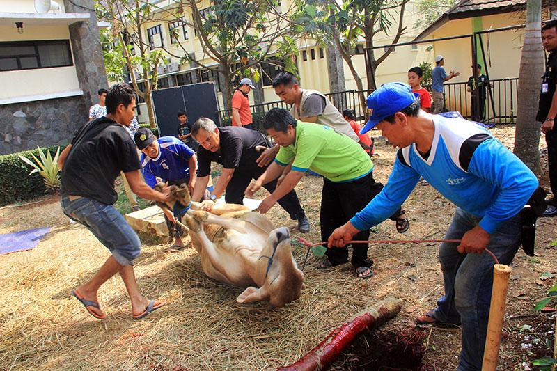 Foto: FPIK berkurban 4 Sapi dan 1 Domba